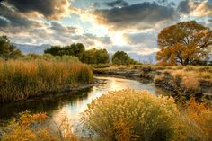 Owens River, California.  Great fishing!