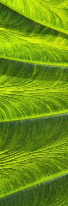 ========εїз p•w•n εїз========  Green | Grün | Verde | Grøn | Groen | 緑 | Colour…