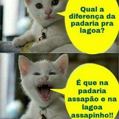 21 Piadas Desse Gatinho Danado! Cat Jokes, Funny Jokes, Funny Animal Memes, Funny Animals, Reverse Gravity Falls, Shawn Mendes Memes, Comedy Memes, Crazy People, I Love Cats