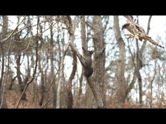 Slow-Motion Squirrel Hunt - YouTube