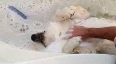 Casper the bath loving dog, via YouTube.