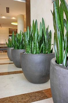 Indoor plants plants for the home modern home plants modern planters home decorating greenery Indoor Garden, Garden Pots, Indoor Plants, Outdoor Pots, Outdoor Gardens, Patio Pergola, Pot Plante, Herbs Indoors, Interior Plants