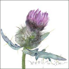 watercolour thistle - Google Search