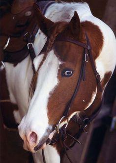 the equus