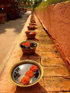 Flowers: Prayer bowls under the bodhi tree, Bodhgaya, India