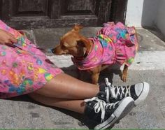 """Nu"" Baby Dog, ropa para tu mascota¡¡"