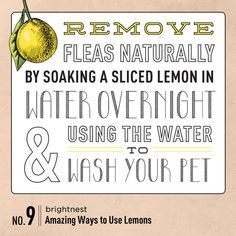 Power to the Lemon: 10 Amazing Household Uses. #9 Remove fleas naturally by soaking a sliced lemon in water overnight & using the water to wash your pet.