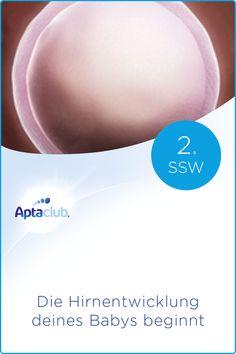 2. SSW: Die befruchtete Eizelle nistet sich in der Gebärmutter ein und bildet nun das Schwangerschaftshormon - jetzt spürst du  körperliche Symptome. Im Schwangerschaftskalender von Aptaclub erfährst du alles über die Veränderungen in deinem Körper & die Wachstumsphasen deines Babys! Babys, Pregnancy Weeks, Baby Delivery, Parenting, Word Reading, Babies, Newborns, Baby Baby, Infants