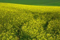 Koop 'Farmers landscape no 01' van Susan Hol voor aan de muur.