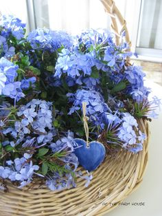 atthefarmhouse: Blue Plumbago