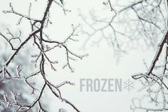FROZEN | Winter Wonderland | Annawithlove Photography