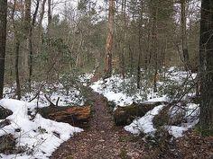 Paul Kercher - Appalachian Spring