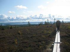 Riisitunturi National Park, Lapland, Fi - Riisitunturin kansallispuisto Photo: Metsähallitus / Jaana Sillman