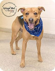 URGENT!  I am at a kill shelter in Troy, OH - Beagle/Shepherd (Unknown Type) Mix. Meet Mason a Dog for Adoption.