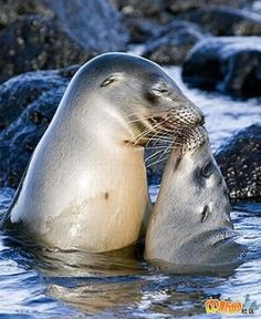 10 funny animal couples