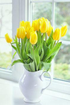 cheery tulips to brighten the room Yellow Tulips, Tulips Flowers, Flowers Nature, Fresh Flowers, Flower Vases, Spring Flowers, Planting Flowers, Tulips In Vase, Amazing Flowers