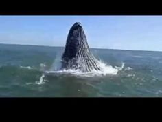 Whales for Kids, Ocean Whale Videos for Children, Lots of Humpback Whales in Nature - YouTube