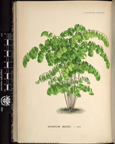 v.27 (1880) - L'Illustration horticole : - Biodiversity Heritage Library