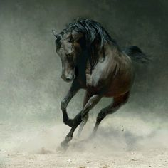 Horses, they give me the feeling of power and freedom!