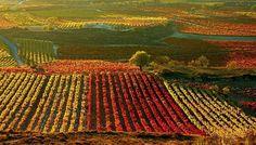 viñedos de La Rioja.