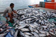 http://www.picture-newsletter.com/fishermen/fisherman-fish-8cw.jpg
