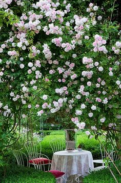 have just the spot in my garden for these climbing roses. Now I just need to find the blooming rose bush! My Secret Garden, Secret Gardens, Beautiful Gardens, Beautiful Flowers, Beautiful Gorgeous, Backyard Seating, Colorful Roses, Garden Cottage, Climbing Roses