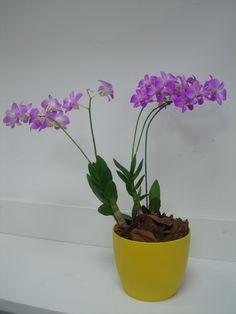 183 - Orquídeas lilás