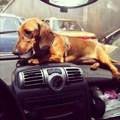 Daschie on dash= dashhound! :)