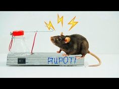 How To Make a High Voltage Mouse Trap - YouTube
