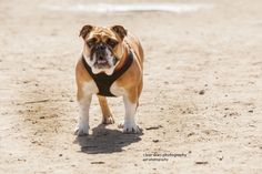 Clear Skies Photography - Pet Photography