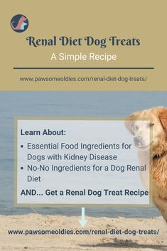 Renal diet dog treats should not usree certain ingredients, like those high in phosphorus. Learn good & bad ingredients for renal dog diet and treats here. Dog Biscuit Recipes, Dog Treat Recipes, Healthy Dog Treats, Dog Food Recipes, Pet Treats, Dog Training Methods, Basic Dog Training, Dog Training Techniques, Training Dogs