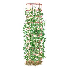 Bean Tower Cage Support| Buy from Gardener's Supply Seriously considering these...