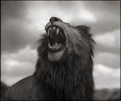 Nick Brandt - Across the Ravaged Land!