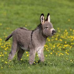Baby animals calendar wildlife-calendars.com