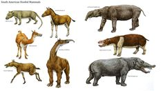 South American Hoofed Mammals - Mammal Like Dinosaurs Wallpaper Image
