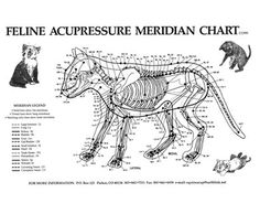 1000 Images About Feline Acupressure On Pinterest Acupressure For Cats And Upper