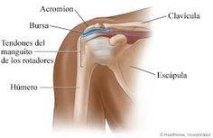 Resultado de imagen para huesos del hombro