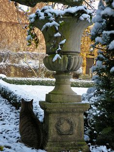 Winter garden and cat