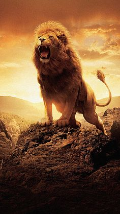 The Chronicles of Narnia: The Lion the Witch and the Wardrobe Phone Wallp. - The Chronicles of Narnia: The Lion the Witch and the Wardrobe Phone Wallpaper - Lion Images, Lion Pictures, Aslan Narnia, Wild Animal Wallpaper, Animals Beautiful, Cute Animals, Wild Animals, Lion Photography, Lion Love