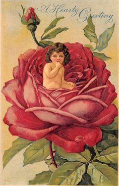 Fantasy Flower Baby~Small Child In Red Rose Bloom~Dew Drops~Embossed~S.102~1907   eBay