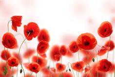 Фотообои цветы | Обои фото цветы Маки заказать купить цена на — Make