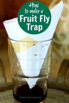 DIY Fruit Fly Trap #DIY #flytrap #bugs