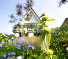 Eigentijds landhuis - Laat je inspireren door onze opgeleverde woningen Inspireren, Plants, Plant, Planets
