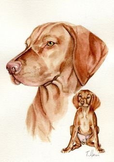 Custom paintings of dogs cats vizsla 8x10 by Earthspalette on Etsy, $100.00