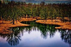 Gorge Reflections - Oregon