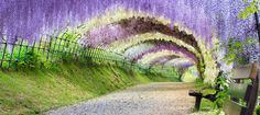 https://www.fairfx.com/static_blob/fuji-garden.jpg