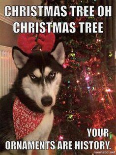 Loving these Xmas dog funnies :-) http://www.dfordog.co.uk/blog/funny-christmas-dog-pics.html