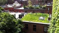 brooklyn heights carriage house green roof – urbanstrong