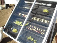 DIY solar food dehydrator step by step instructions pics homesteading off grid Off The Grid, Diy Solar, Solar Oven Diy, Dehydrated Food, Dehydrator Recipes, Homestead Survival, Do It Yourself Home, Alternative Energy, Electronics Projects