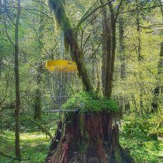 Camp Serene Disc Golf Course Oregon